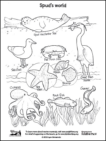 Coloring Pages. Little Cute Seal Swims. Stock Vector ... | 538x406
